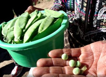 Cultura maya agricultura