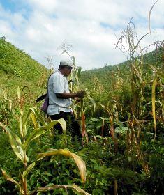 Como cultivaban los mayas